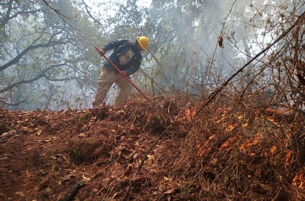 Liquidados cuatro incendios en el estado: PC